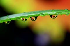 Gocce dell'acqua e del foglio Fotografie Stock