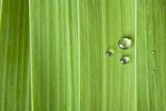 Gocce dell'acqua su un foglio Fotografia Stock