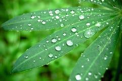Gocce dell'acqua sui fogli verdi freschi fotografia stock