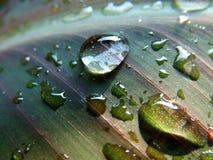 Gocce dell'acqua sul foglio fotografie stock libere da diritti