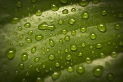 Gocce dell'acqua sul foglio fotografia stock libera da diritti