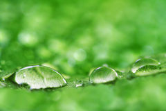 Gocce dell'acqua sul foglio Fotografia Stock