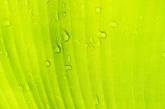 Gocce dell'acqua sul foglio della banana Fondo di Abstact Immagine Stock Libera da Diritti