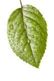 Gocce dell'acqua sul foglio della pianta Immagini Stock Libere da Diritti