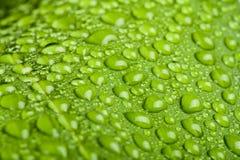 Gocce dell'acqua sul foglio della pianta verde Fotografie Stock Libere da Diritti