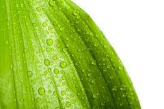 Gocce dell'acqua sul foglio della pianta verde Immagini Stock Libere da Diritti