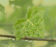 Gocce dell'acqua sul foglio verde immagini stock