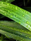 Gocce dell'acqua sul foglio verde immagine stock