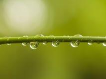 Gocce dell'acqua sul germoglio di bambù fotografie stock libere da diritti