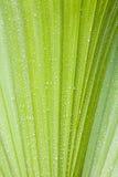 Gocce dell'acqua sul palmtree Fotografia Stock Libera da Diritti