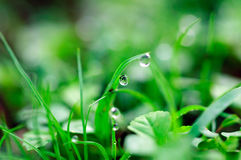 Gocce dell'acqua sull'erba verde Immagine Stock