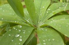 Gocce dell'acqua sulla pianta immagine stock libera da diritti