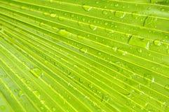 Gocce dell'acqua sulle foglie di palma Immagini Stock Libere da Diritti