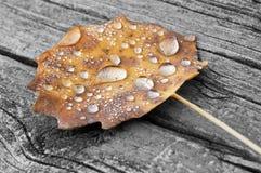 Gocce della foglia di autunno Immagine Stock