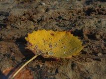Gocce della foresta di autunno in permesso Fotografia Stock