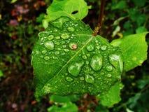 Gocce della pioggia fotografie stock libere da diritti