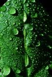 Gocce della pioggia Immagini Stock Libere da Diritti