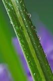 Gocce della pioggia e dell'erba Fotografie Stock