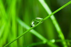 Gocce della pioggia su un foglio verde Fotografie Stock Libere da Diritti