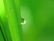 Gocce della pioggia su una lamierina di erba Immagini Stock Libere da Diritti