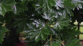 Gocce della pioggia sui fogli verdi stock footage