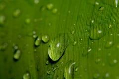 Gocce della pioggia sul foglio della banana Fotografie Stock Libere da Diritti