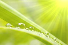 Gocce della pioggia sull'erba ad alba Immagine Stock