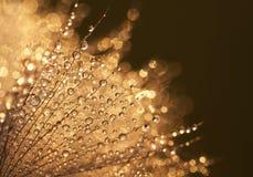 Gocce di acqua brillanti Fotografie Stock Libere da Diritti