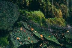 Gocce di acqua di caduta sulle pietre muscose Fotografia Stock
