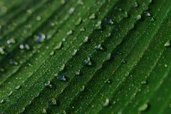 Gocce di acqua chiaro acquoso piovoso Dopo la pioggia nave fotografie stock libere da diritti