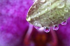 Gocce di acqua con la riflessione del fiore dell'orchidea, macro Immagini Stock