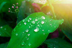 Gocce di acqua e fiori ed arancione-chiaro, riflettendo la freschezza della natura Immagine Stock Libera da Diritti