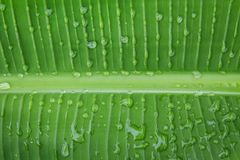 Gocce di acqua fresche sulla foglia in giardino Immagini Stock Libere da Diritti
