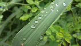 Gocce di acqua su erba Immagini Stock