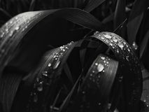 Gocce di acqua su erba fotografie stock libere da diritti