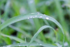 Gocce di acqua su erba Immagine Stock Libera da Diritti