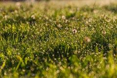 Gocce di acqua su erba Fotografie Stock