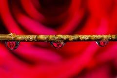 Gocce di acqua su un bastone Fotografia Stock Libera da Diritti