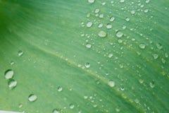 Gocce di acqua su una foglia verde Fotografie Stock Libere da Diritti