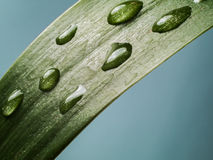 Gocce di acqua su una foglia verde Immagine Stock Libera da Diritti