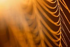 Gocce di acqua su una ragnatela nella luce solare, fondo astratto giallo Alba nella natura, luce di mattina immagini stock