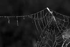 Gocce di acqua sul web Fotografia Stock