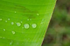 Gocce di acqua sulla foglia in giardino Fotografia Stock Libera da Diritti