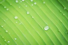 Gocce di acqua sulla foglia in giardino Immagine Stock Libera da Diritti