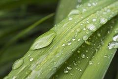 Gocce di acqua sulla foglia verde Fotografia Stock Libera da Diritti