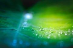 Gocce di acqua sulla foglia verde fresca dopo la pioggia fotografia stock libera da diritti