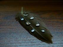 Gocce di acqua sulla penna Immagini Stock