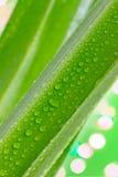 Gocce di acqua sulle foglie Immagine Stock