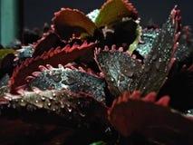 Gocce di acqua sulle foglie dopo le goccioline della pioggia immagine stock libera da diritti