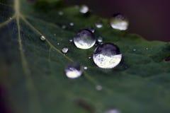 Gocce di acqua tenere sulla foglia fresca della molla con bokeh fotografia stock